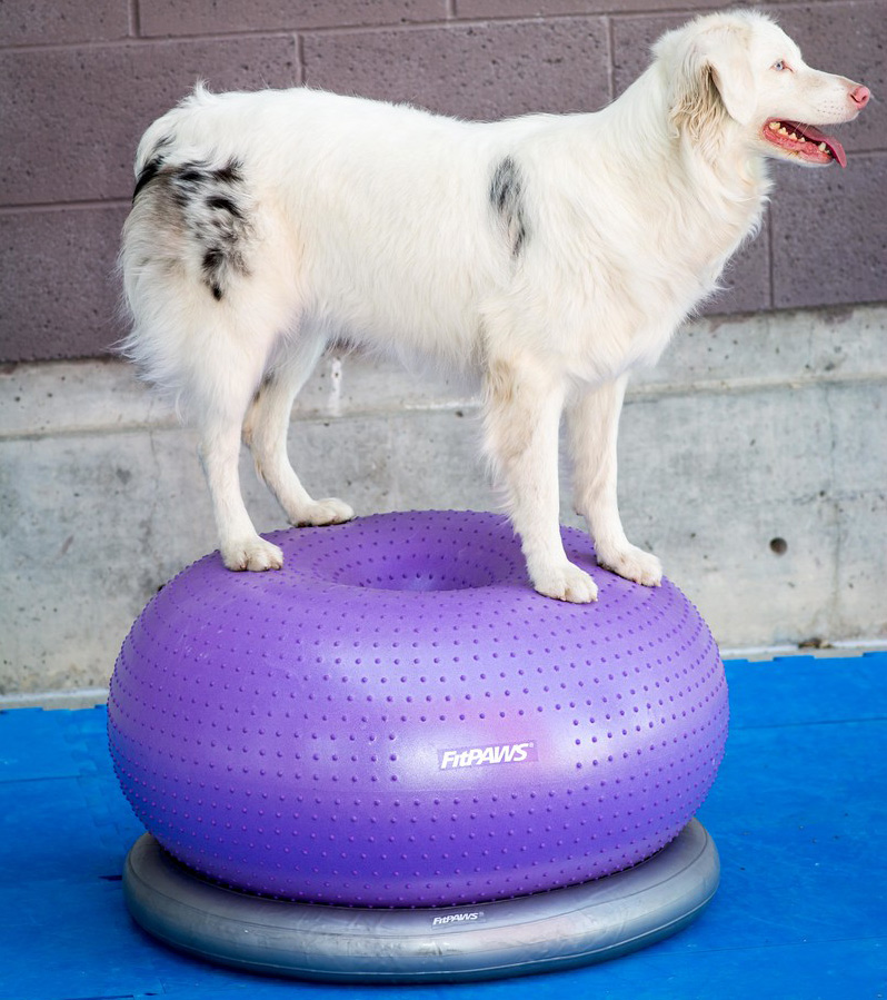 Balance and Stability Exercises for Dogs | FitPAWS | FitPAWS