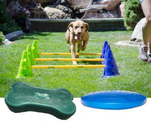 CanineGym_Starter-Kit-Group