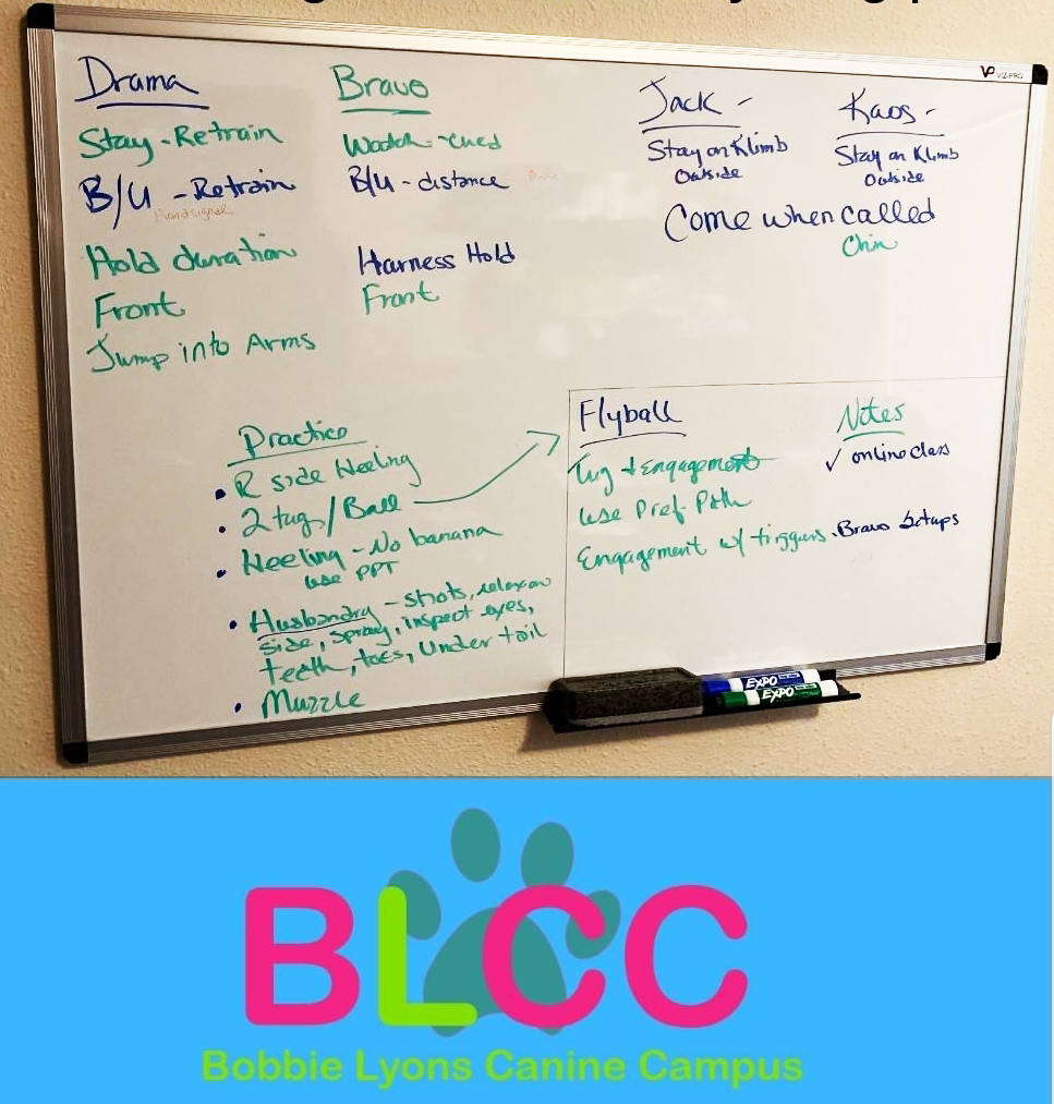 This image has an empty alt attribute; its file name is Bobbie-Lyons-White-Boarding.jpg