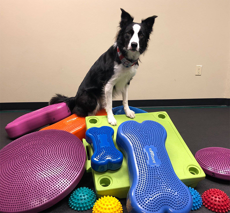 Strategies for Teaching Pet Dog Fitness | FitPAWS